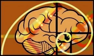 Denver on the Brain